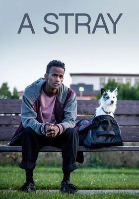 A Stray's Poster