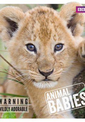 Animal Babies 's Poster