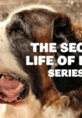 개에 관한 놀라운 비밀의 포스터
