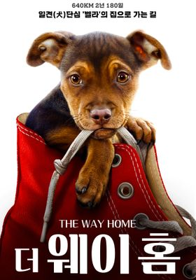 A Dog's Way Home 's Poster
