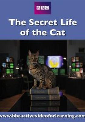 The Secret Life of Cats 's Poster