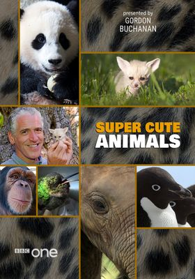 Super Cute Animals's Poster