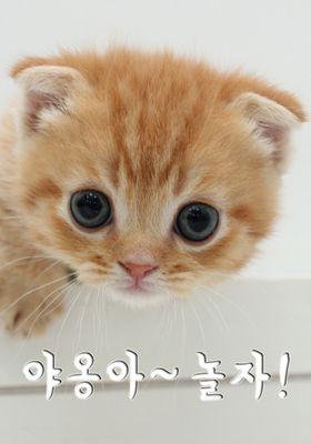 『Cat TV(英題) シーズン 1』のポスター