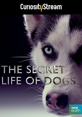 『イヌ その秘められた力』のポスター
