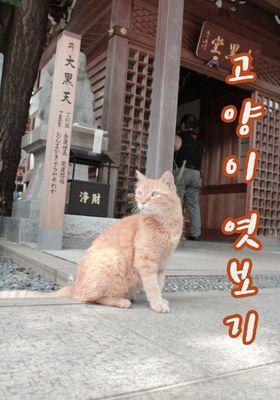『Cat TV(英題) シーズン 3』のポスター