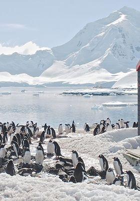 『Nature - Penguin Post Office(原題)』のポスター