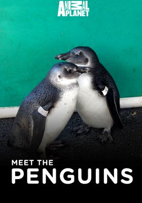 『Meet the Penguins(原題)』のポスター