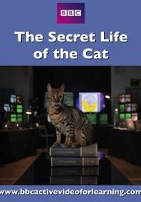 『密着! ネコの一週間』のポスター